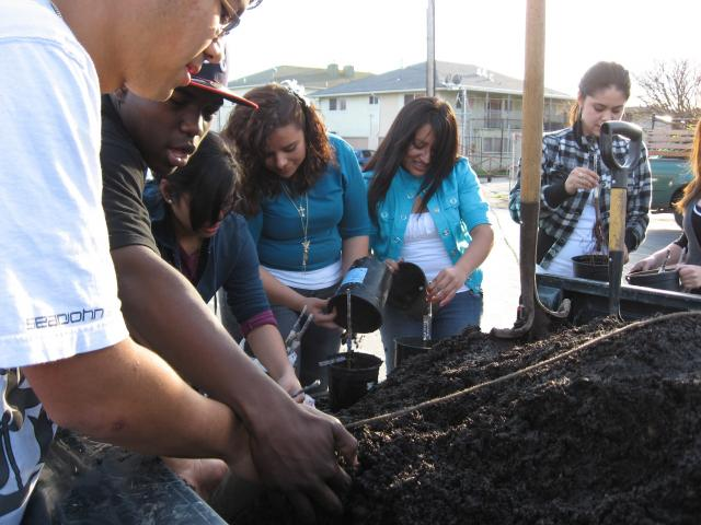 The urban agriculture class at Richmond High School learns about tree grafting.  © 2009 Clifton Ross